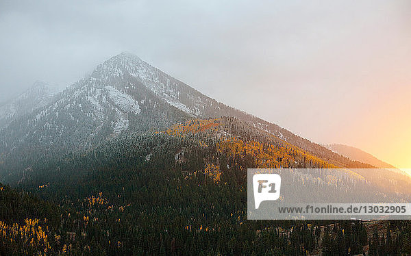 Early snow in autumn in Big Cottonwood Canyon at sunset  Salt Lake City  Utah  USA