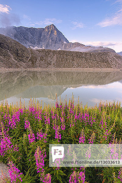 Mount Adamello in the summer season  Parco Adamello  Vallecamonica (Val Camonica)  Brescia Province  Lombardy  Italy