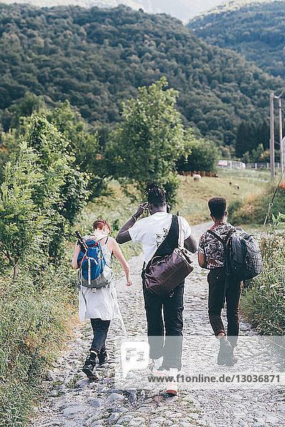 Junge erwachsene Wanderfreunde wandern auf ländlicher Kopfsteinpflasterstraße  Rückansicht  Primaluna  Trentino-Südtirol  Italien