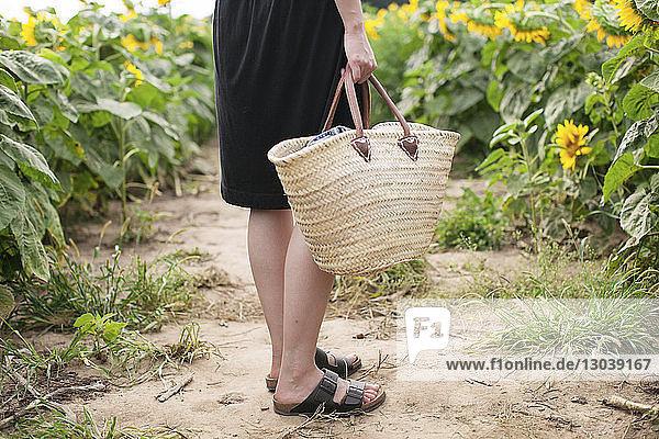Niedriger Teil einer Frau  die einen Korb hält  während sie auf dem Feld inmitten von Sonnenblumen auf dem Bauernhof steht