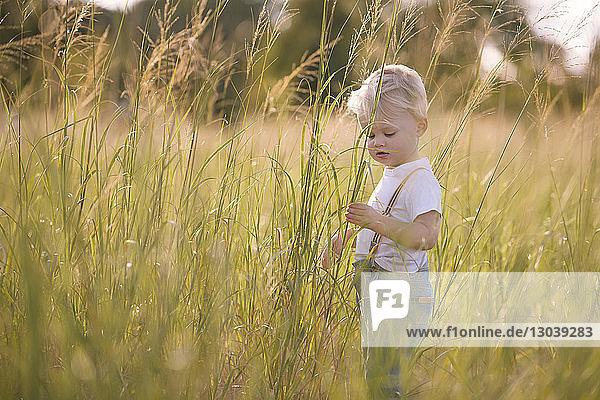 Kleiner Junge steht auf Grasfeld