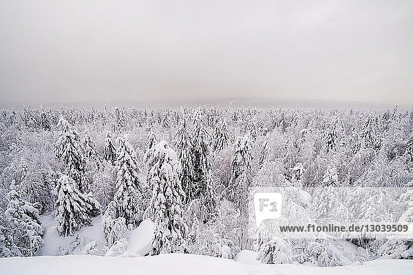 Aerial view of snow covered trees against sky