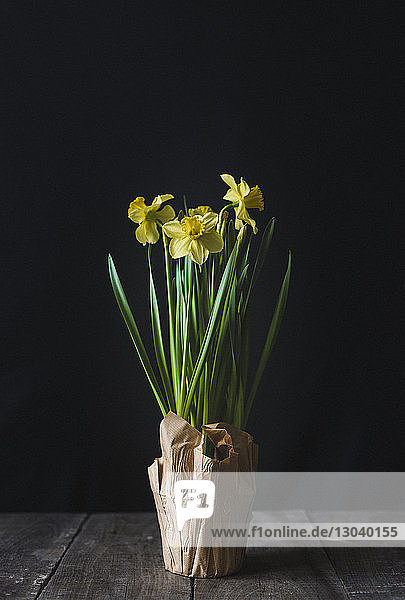 Close-up of flowers on wooden table against black background