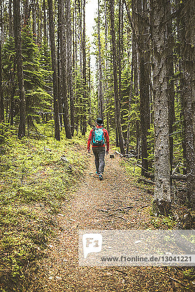 Rückansicht eines im Wald wandernden Menschen