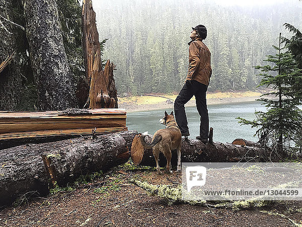 Mann schaut auf  während er auf einem umgefallenen Baumstamm im Wald steht