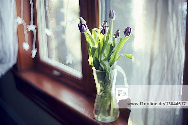 Hochwinkelansicht von violetten Tulpen in einer Vase auf der Fensterbank