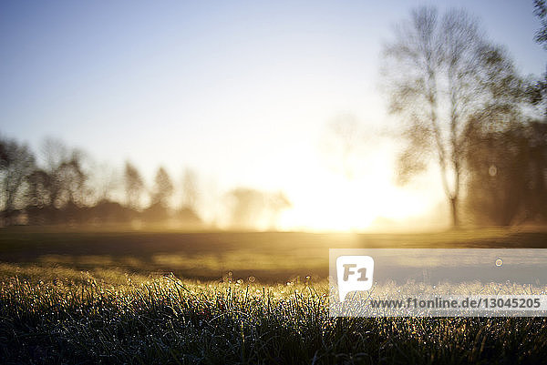 Surface level of grass on golf course during sunrise