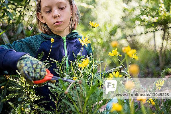 Ernsthafter Junge beschneidet Blumen im Garten