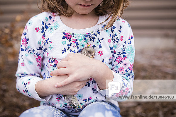Midsection of girl holding baby chicken, Midsection of girl holding baby chicken