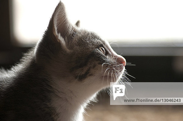 Close-up of kitten looking away at home
