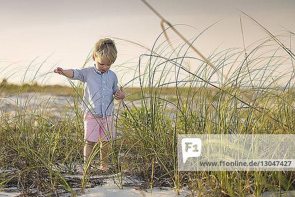 Junge steht inmitten von Gras am Strand gegen den Himmel bei Sonnenuntergang