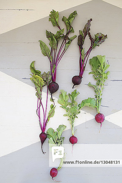 Overhead view of beetroot and radishes with leaves on floor