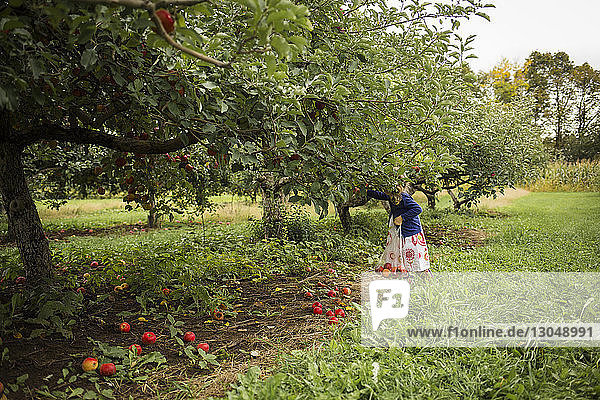 Girl holding plastic bag while picking apples in orchard