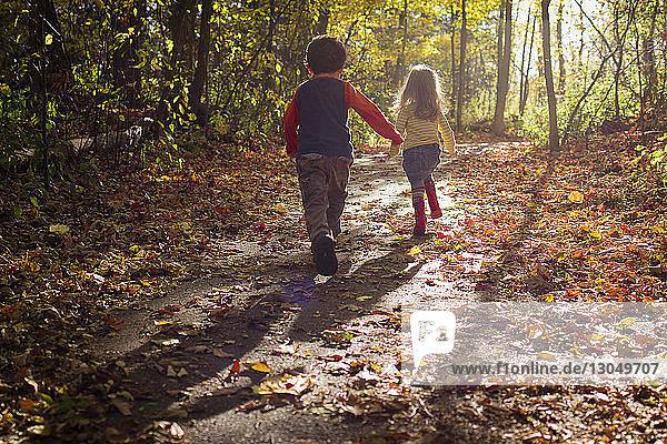 Rückansicht von verspielten Geschwistern  die im Herbst im Wald rennen