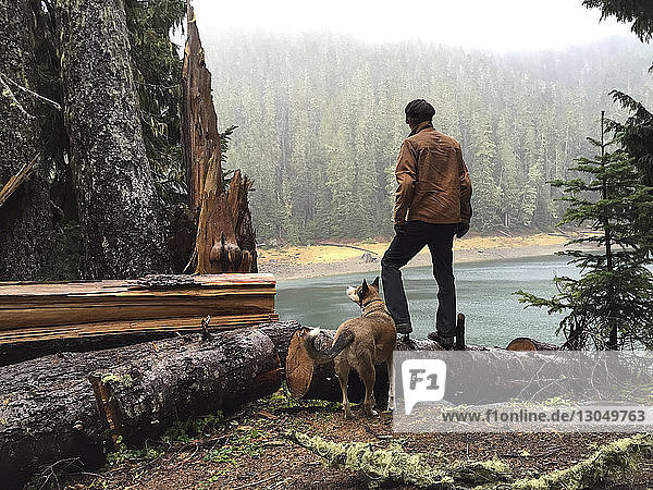 Rückansicht eines Mannes  der auf einem umgefallenen Baumstamm im Wald steht