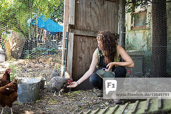 Woman feeding hens at poultry farm