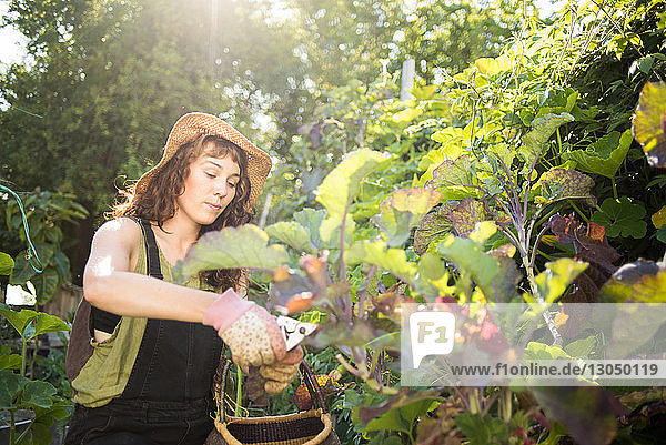 Woman pruning plants in garden during sunny day