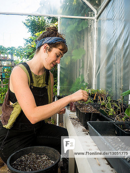 Woman sowing seeds in pot at greenhouse