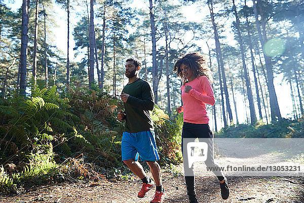 Weibliche und männliche Läufer laufen gemeinsam im sonnenbeschienenen Wald