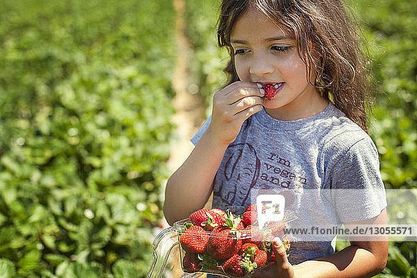 Nahaufnahme eines auf dem Feld stehenden Mädchens  das Erdbeeren isst