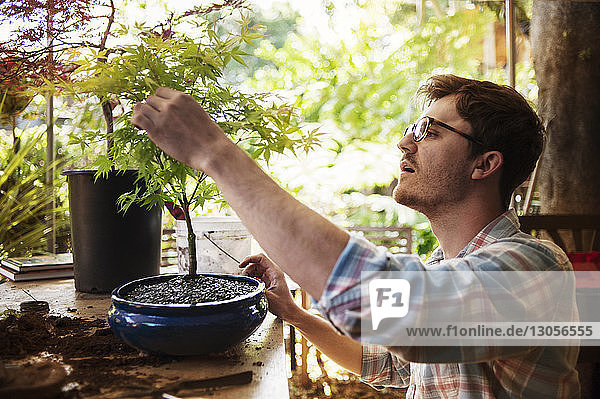 Man analyzing potted plant at home