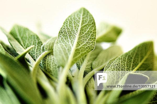 Nahaufnahme von grünem Blattgemüse