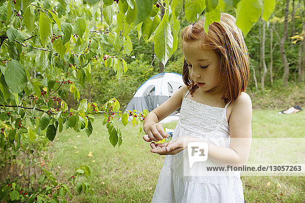 Cute girl plucking berries in forest