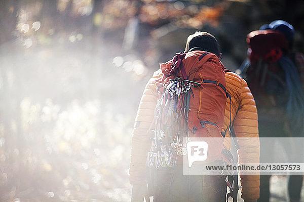 Rückansicht von Freunden  die an einem sonnigen Tag im Wald spazieren gehen