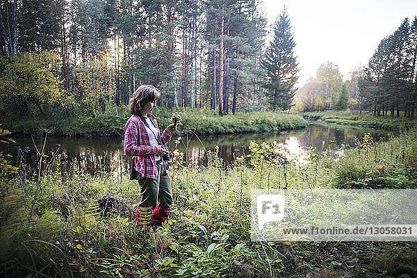 Wanderin hält Kamera beim Waldspaziergang