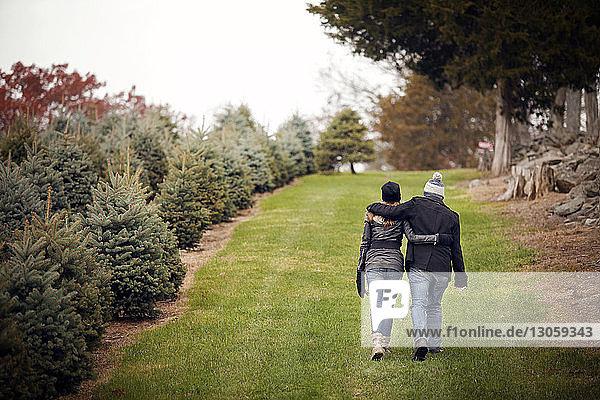 Rückansicht eines Paares  das auf einem Grasfeld bei einer Weihnachtsbaumfarm spazieren geht