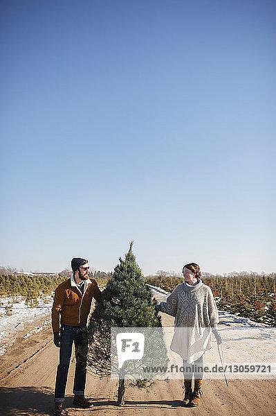 Freunde halten Weihnachtsbaum auf der Straße gegen den klaren blauen Himmel