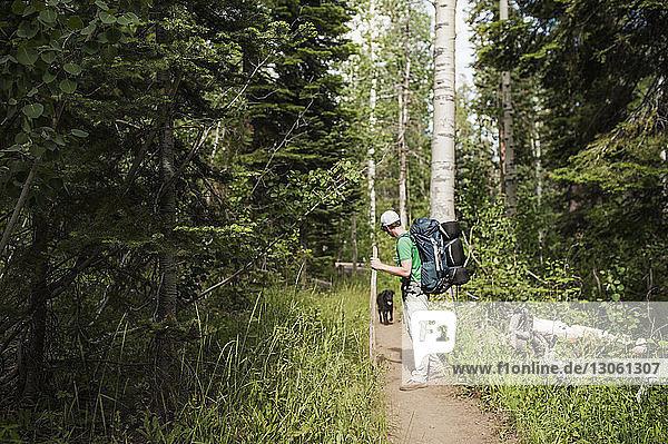 Mensch und Hund auf dem Weg zwischen Bäumen im Wald