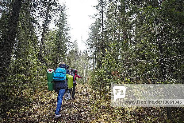Rückansicht von Wanderern  die beim Waldspaziergang Rucksäcke tragen
