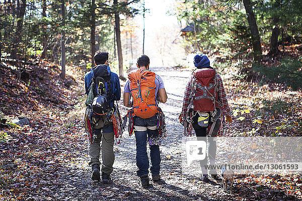 Rückansicht von Freunden  die auf der Straße inmitten von Bäumen im Wald spazieren