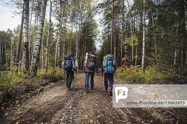 Rückansicht von männlichen Freunden  die einen Rucksack tragen  während sie auf einem Feldweg im Wald gehen
