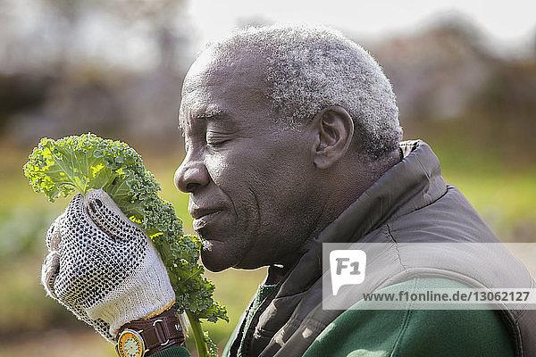 Mann untersucht Grünkohl im Hinterhof