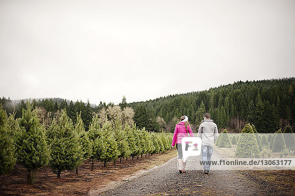 Rear view of couple walking on footpath at Christmas tree farm against clear sky