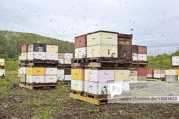 Container auf Holzpalette im Betrieb