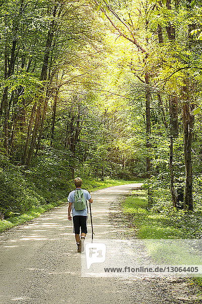 Rear view of hiker with backpack walking on footpath amidst trees