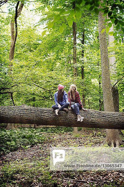 Freunde unterhalten sich  während sie auf einem Baumstamm im Wald sitzen