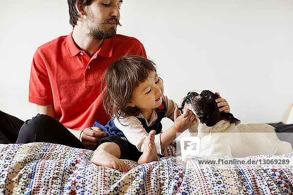 Father and daughter playing with dog while sitting on bed against wall