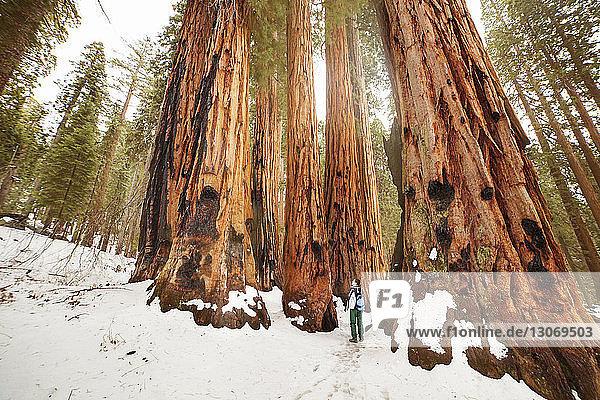 Rückansicht eines Mannes  der auf einem schneebedeckten Feld im Wald steht