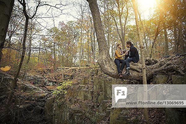 Auf Baumstamm sitzendes Ehepaar im Wald