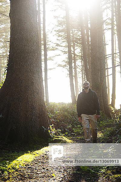 Mann schaut beim Waldspaziergang auf