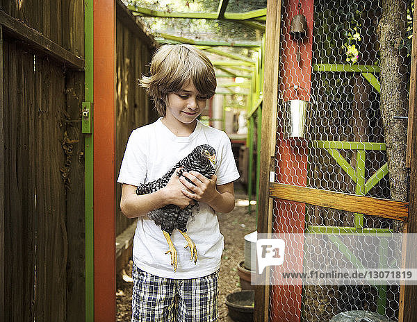 Boy holding hen in backyard