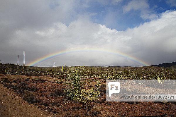 Regenbogen über einem Kaktus  der auf einem Feld vor bewölktem Himmel wächst