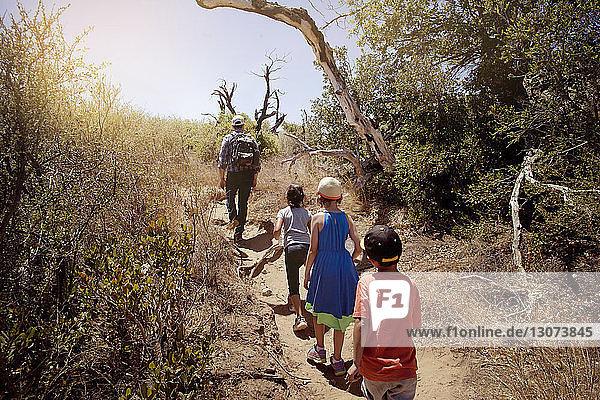 Rückansicht einer Familienwanderung auf einem Pfad inmitten von Bäumen im Wald