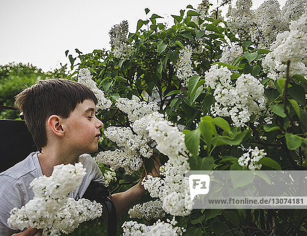 Boy with eyes closed smelling white flowers at park