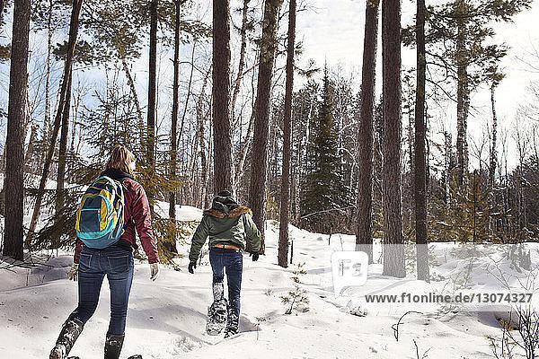 Rückansicht von männlichen und weiblichen Wanderern  die im Winter im Wald wandern