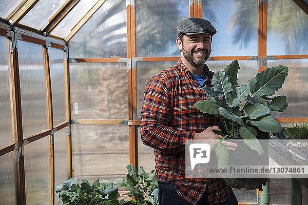 Porträt eines Mannes  der eine Blattgemüsepflanze hält  während er im Gewächshaus steht